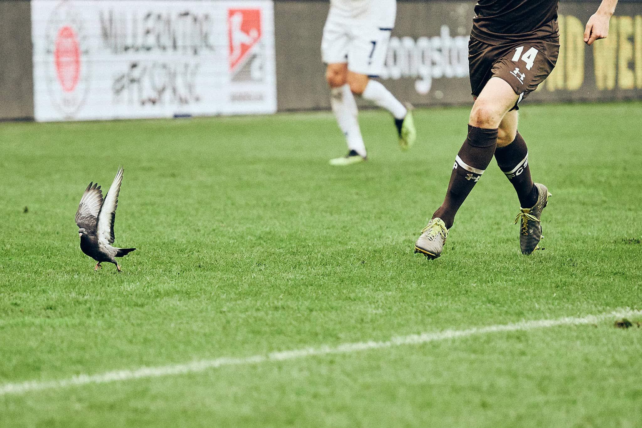 Nach dem Spiel – Karlsruher SC (H) – Spieltag 12 – Saison 2019/2020